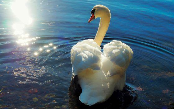 Лебеди (16:10)