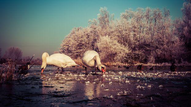 Зимний пруд (16:9)