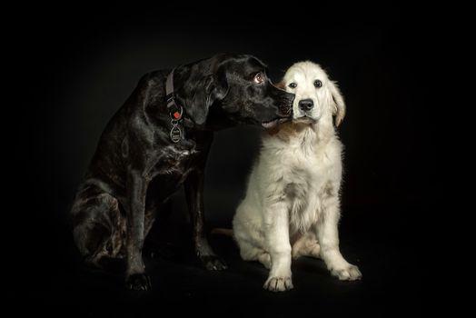 dog, darkness, portrait, dogs, druganы, white, the black, puppy