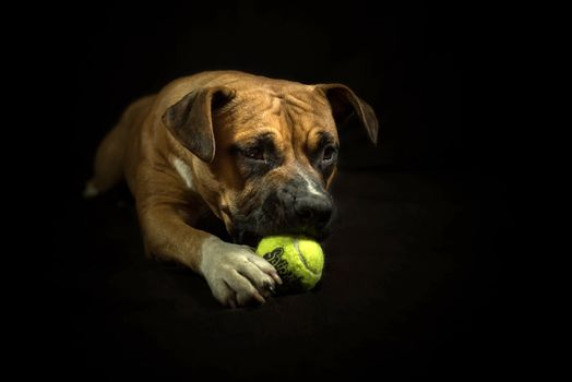 dog, darkness, portrait, outside, feet, Staffordshire Terrier