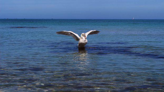 Взмах крыльев (16:9)