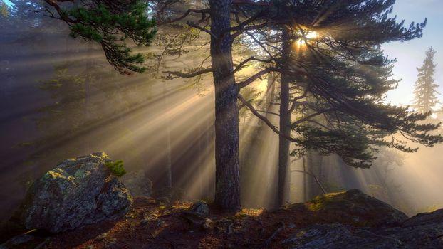 Лучистый лес (21 шт)