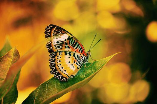 письмо, бабочка, макрос