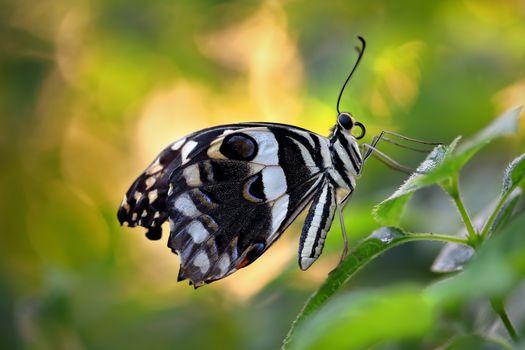 бабочка, растение, письмо, макрос