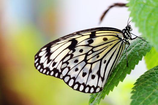 бабочка, письмо, макрос
