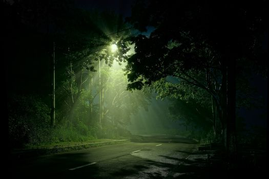 night, road, lamp, forest, trees, bushes, plants