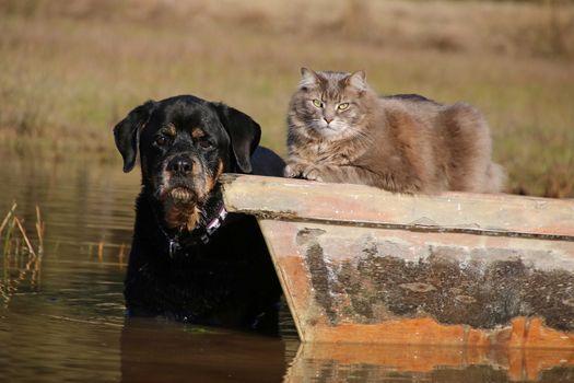 cat, cat, dog, friends, a boat, water