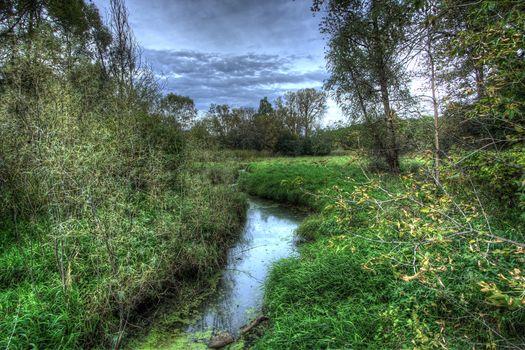 Purgatory Creek, Minnesota, River, trees, nature