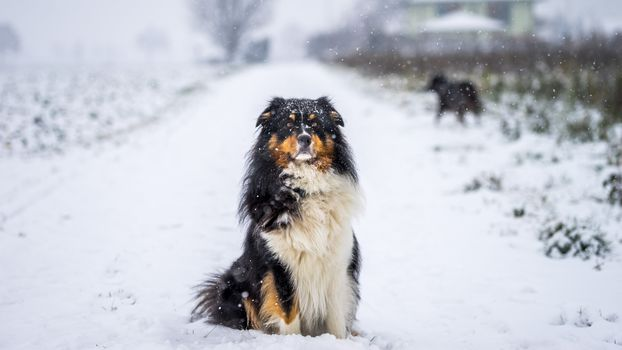dog, muzzle, nature, winter, snow, road
