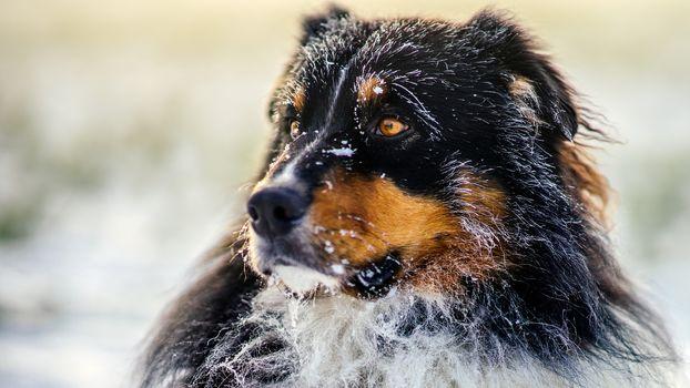 dog, muzzle, nature, snow, winter, portrait