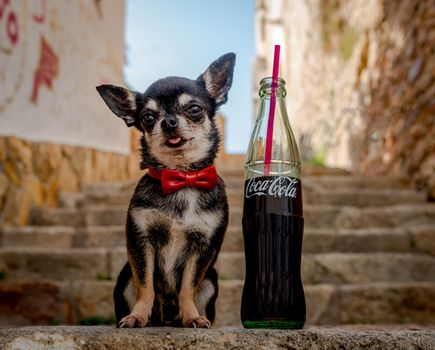 Chihuahua, dog, sobachonka, pjosik, Coke, bottle, butterfly, stairs, stairs