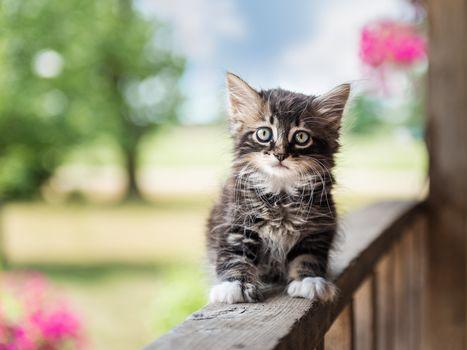 kitten, kid, sight, hips