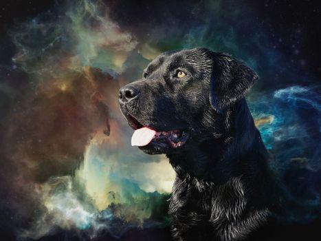 Labrador, dog, portrait