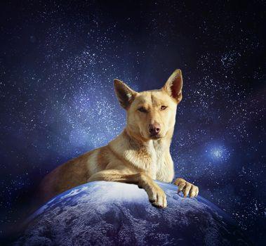 Australian Kelpie, dog, Earth, portrait, radiance