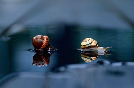 улитка, жёлудь, вода, отражение, макрос