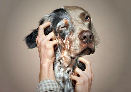 Fakemanipulation, fotomanypulyatsyya, art, photoshop, dog, arms