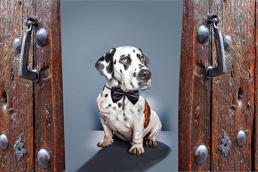 Fakemanipulation, fotomanypulyatsyya, art, photoshop, dog