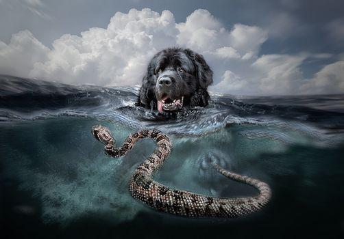 Fakemanipulation, fotomanypulyatsyya, art, sea, dog, snake