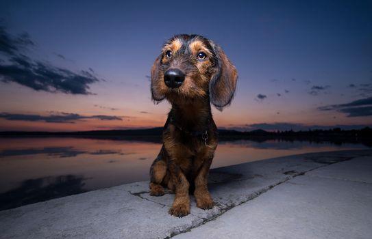 dog, water, dusk, muzzle, embankment, foreshortening