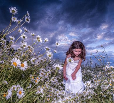 sunset, field, chamomile, flowers, girl, landscape
