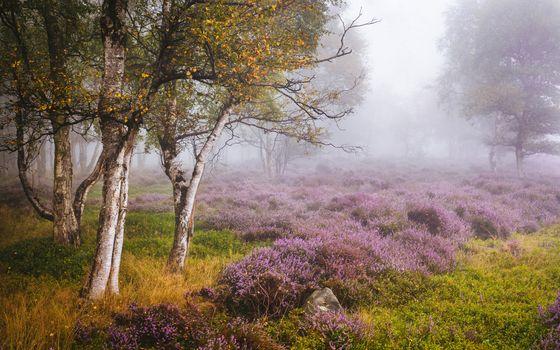 Stanton Moor, Peak District, Derbyshire, England, Pik-District, Derbyshire, England, autumn, meadow, trees, birch, heather
