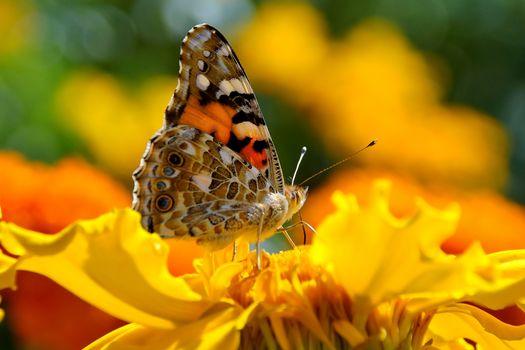 Бабочки-бабули (30 шт)