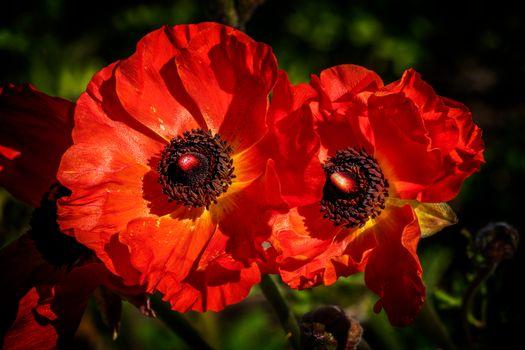 Яркие цветы (5К, 12 шт)