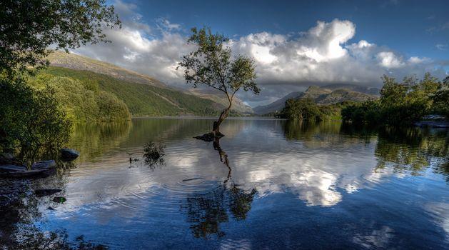 Llyn Padarn, Сноудония, Гуинет, Уэльс, Озеро Падарн, Сноудония, Гвинет, Уэльс, озеро, отражение, дерево