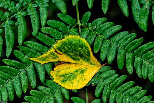 листва, листья, макрос