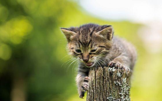 kitten, kid, pisklya, hips