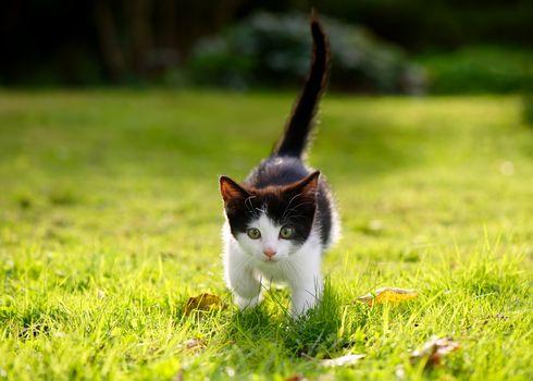 kitten, kid, lawn, grass, walk