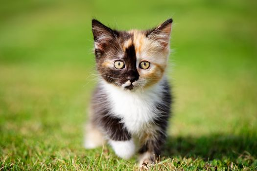 kitten, kid, sight, grass, hips