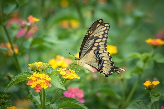 бабочка, цветок, цветы, флора, макрос