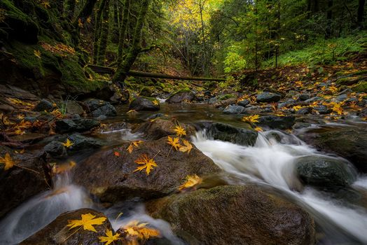 Sonoma Creek, California, Sonoma Creek, California, autumn, Creek, small river, forest, stones, leaves