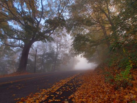 Devou Park, Covington, Kentucky, Park Devu, Kovynhton, Kentucky, autumn, road, trees, leaves