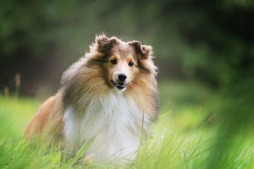 selten, dog, grass, hips