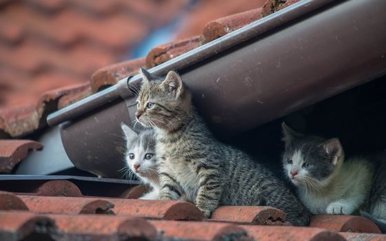 kittens, kids, trio, trine, on the roof
