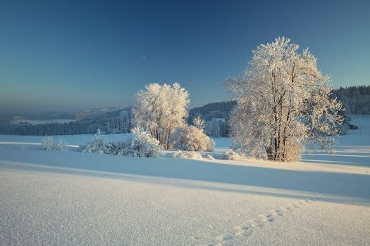 Bavarian Forest, Bavaria, Germany, Les Bavarskiy, Bayern, Germany, winter, snow, trees, footprints