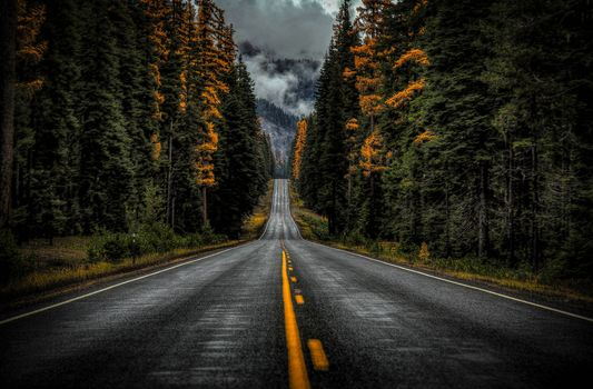 Highway 410, Washington State, Washington state, road, forest, trees, autumn