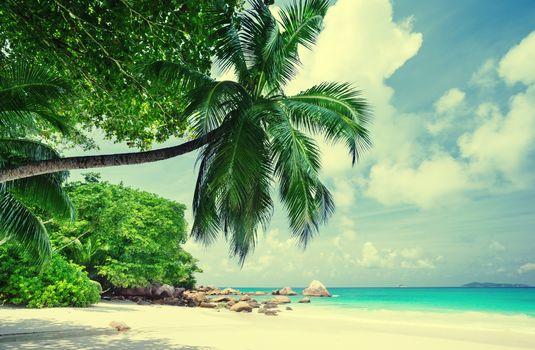 остров, море, океан, берег, пляж, пальмы, пейзаж