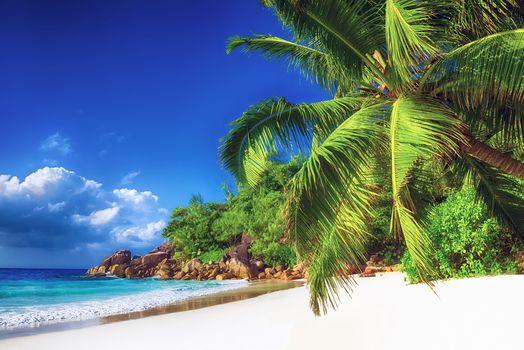 Island, sea, ocean, Coast, beach, palm trees, landscape