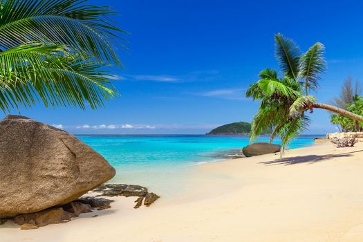 Island, sea, ocean, Coast, beach, palm trees, landscape