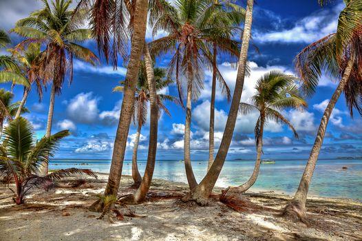 Французская Полинезия, Тихий океан, остров, пальмы, берег, пляж, пейзаж