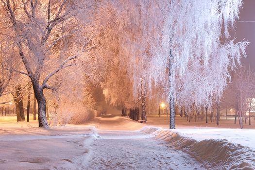 winter, snow, road, trees, sunset, park, lights, landscape