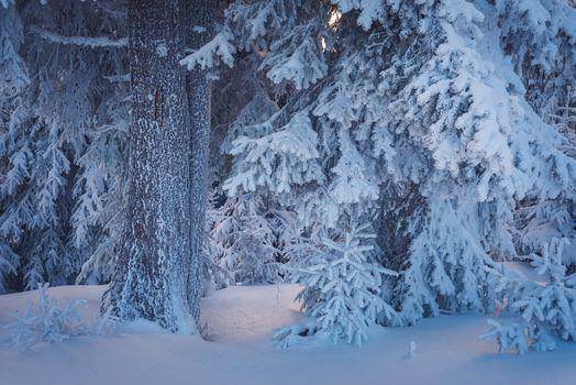зима, лес, деревья, снег, сугробы, природа