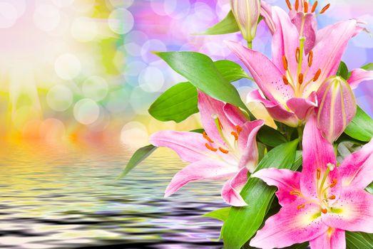 красивые цветы, лилии, лилия, красивый фон, флора, цветы крупным планом