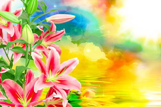 beautiful flowers, lily, lily, beautiful background, flora, flowers close up