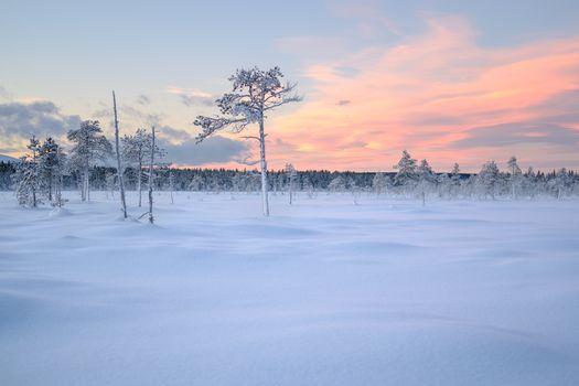 winter, sunset, snow, trees, landscape
