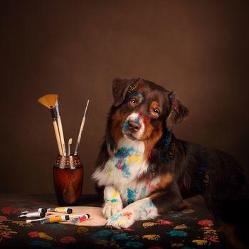 brush, paints, dog, animal