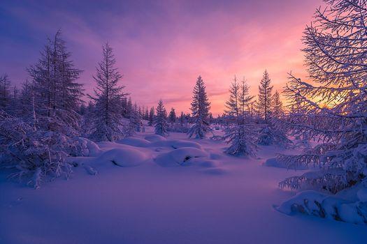 sunset, winter, snow, trees, snowdrifts, landscape